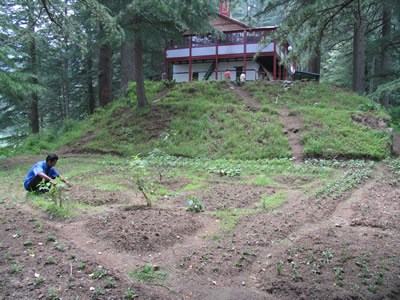 Herbal garden situated at the Urusvati area (2005)