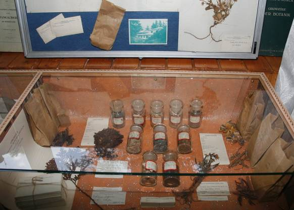 Items from botanical collections of the Urusvati Institute exhibited for the first time